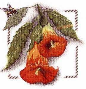 04.008.04 Бругманзия (МИ)