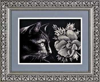 1061 Кот и анемон (Alisena)