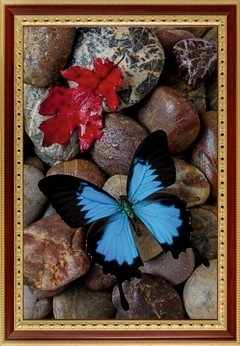 108 Бабочка на камнях