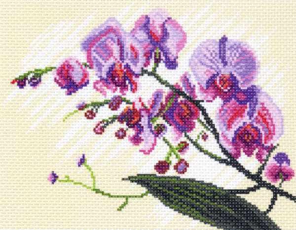 1316 Орхидеи, композиция (МП)