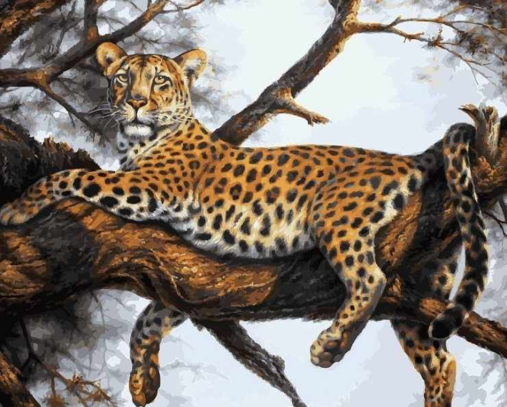 170-AB Леопард на отдыхе - раскраска (Белоснежка)