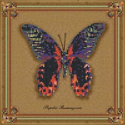 1Нбис-013арт коллекция бабочек - Papilio Rumanzovia - набор