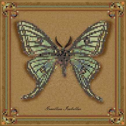 1Нбис-016арт коллекция бабочек - Graellsia Isabellae - набор