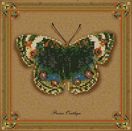 1Нбис-017арт коллекция бабочек - Precis Orithya - набор