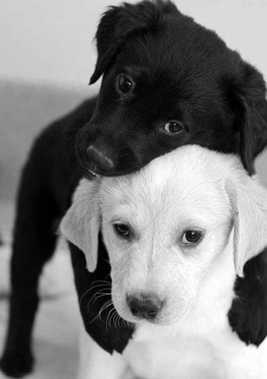 Black and white baby animals
