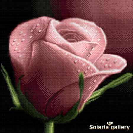 3111-41 Твоя роза