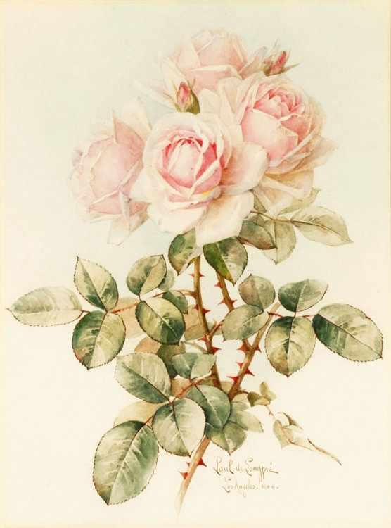 316 Нежные розы