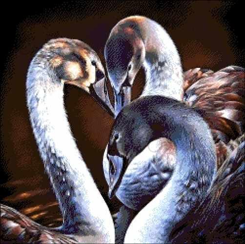 43-2116-НЧ Черные лебеди - набор для вышивания (А. Токарева)