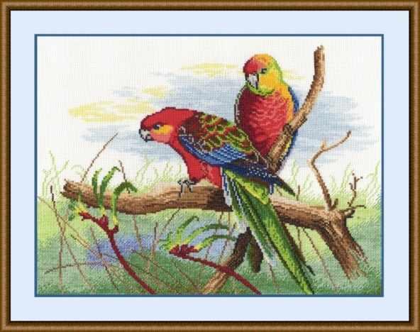 509 Попугаи (Овен)