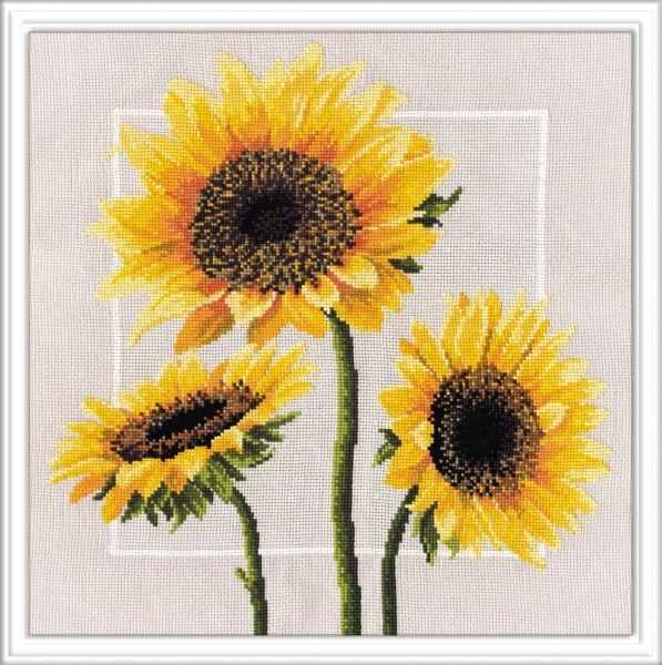 562 Цветы солнца (Овен)