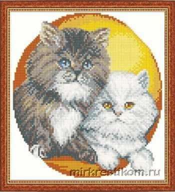 611 Кошки