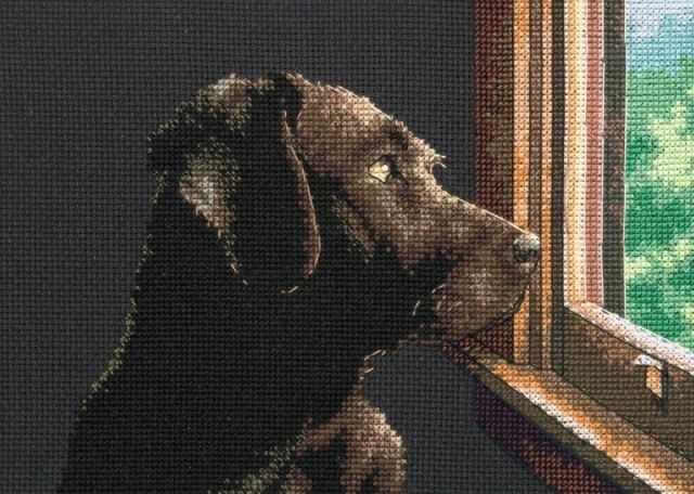 65104-DMS Pondering Pup