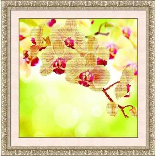 80172 Нежная орхидея (Honey home)