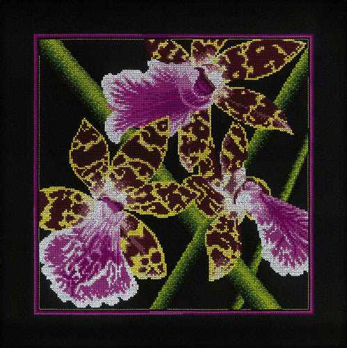 "M265 Орхидеи ""Зигопеталум"""
