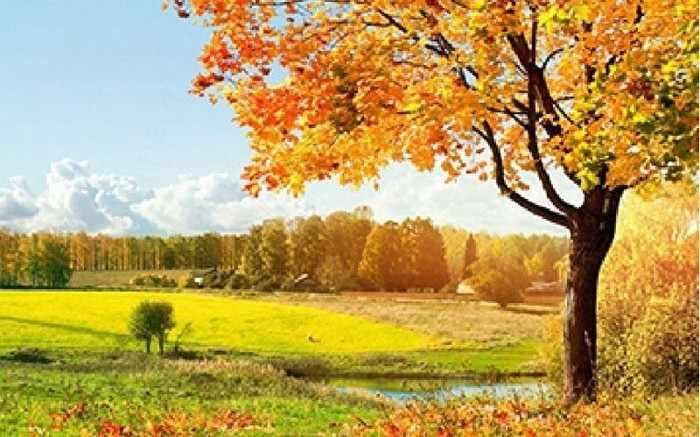 Ag1023 - Осень - мозаика