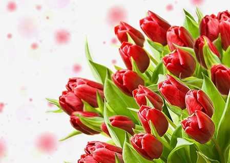 Ag4630 - Красные тюльпаны - мозаика