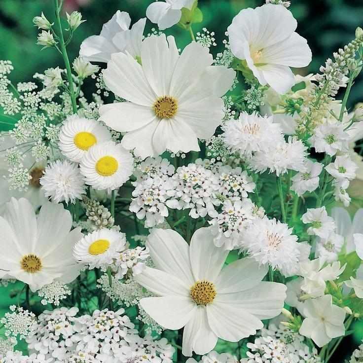 Белые полевые цветы (АЖ-1195) - картина стразами