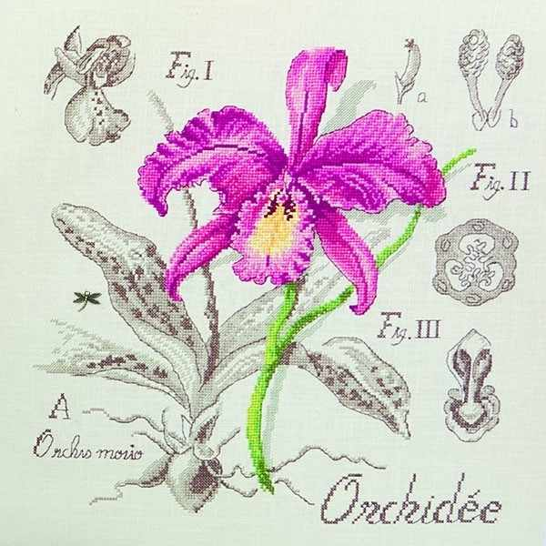 "EOA/CRE Этюд ""Орхидея"" (ПВ)"