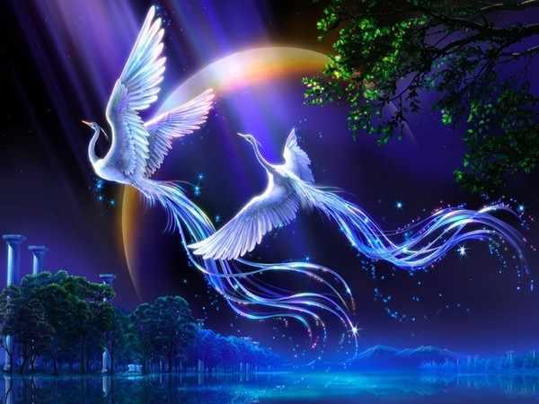 GX7014 Райские птицы