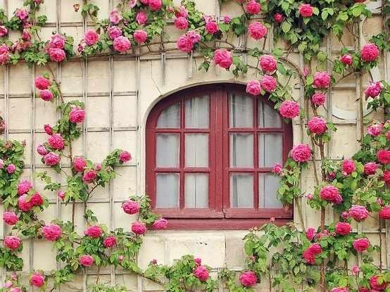 GX8727 Окно в розовых цветах