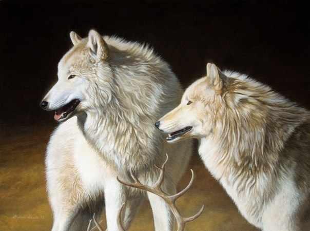 GX7126 Два белых волка