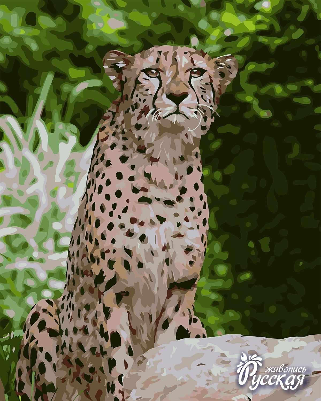 H029 Гепард