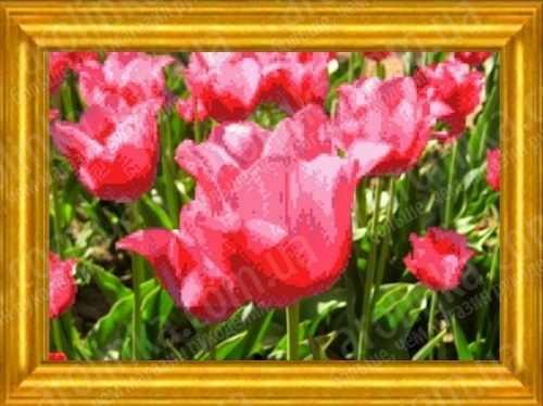 КБЦ 3011 Тюльпаны (Каролинка)