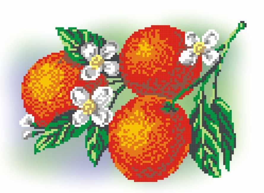 КН-434 Апельсины (МП Студия)