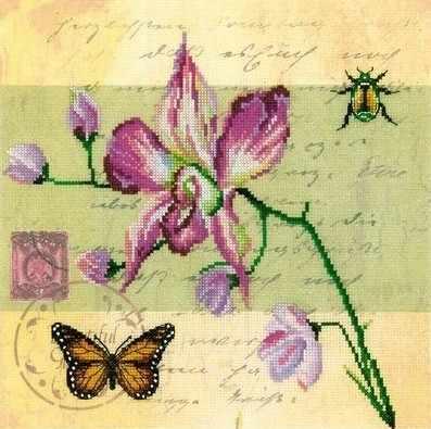 M70017 Почтовая открытка-орхидея