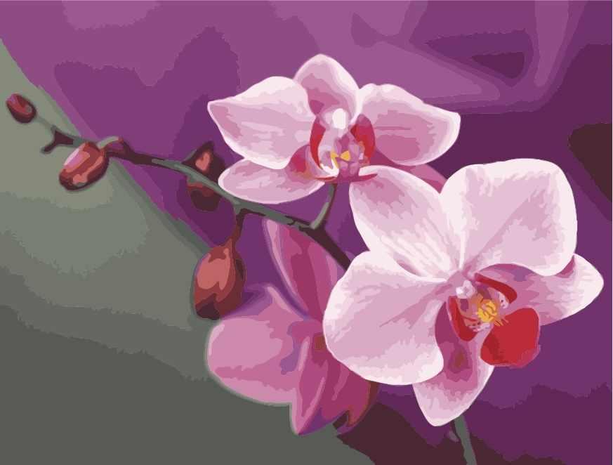 MG1081 Розовые орхидеи - раскраска (Menglei)