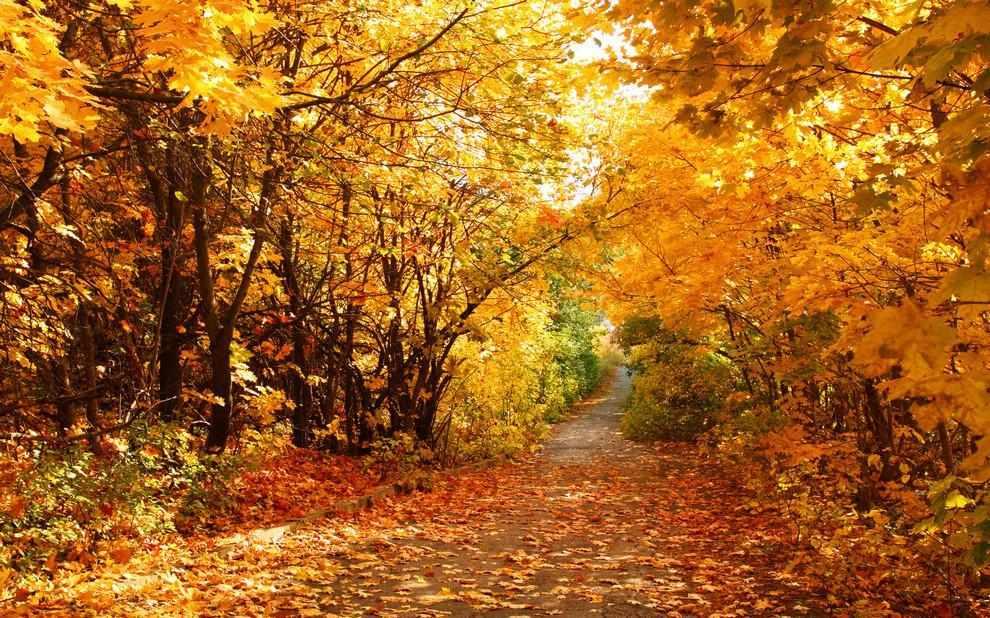 N-023 Пейзаж Осень - мозаика Милато