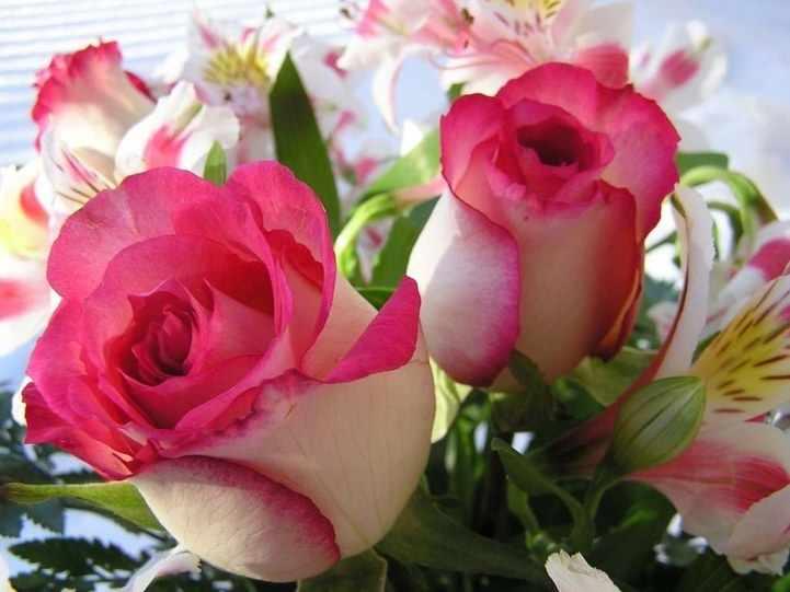N-314 Розы и Ирисы - мозаика Милато
