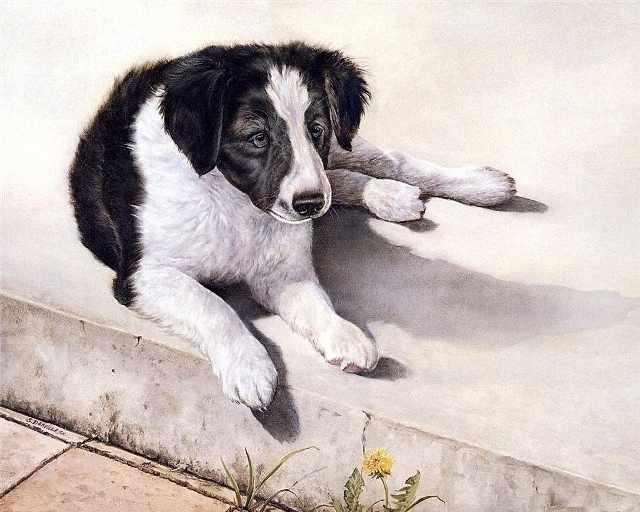 R-911 Собака - мозаика Милато