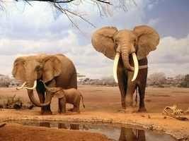 R-912 Семья слонов - мозаика Милато