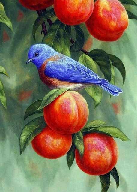 RDG-0443 Птичка на ветке абрикосов