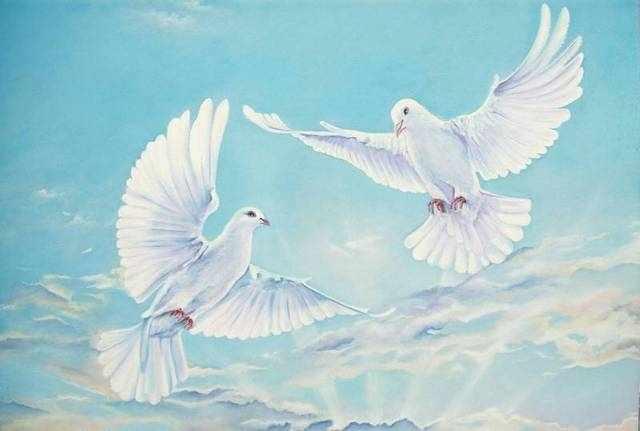 RDG-0774 Голуби в небе