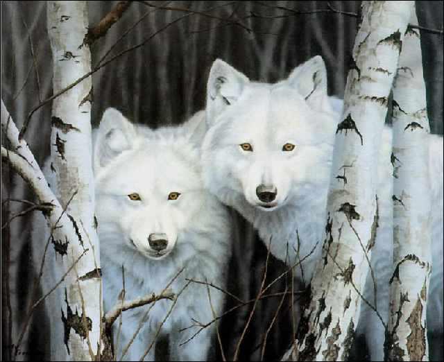 SG197 Снежные волки - мозаика из страз (Цветной)