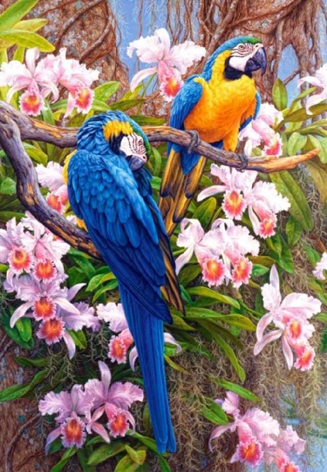 SG299 Попугаи - мозаика из страз (Цветной)