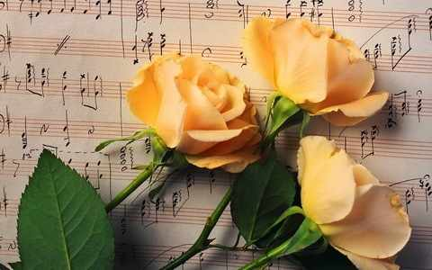 Z-097 Желтые розы - мозаика Милато