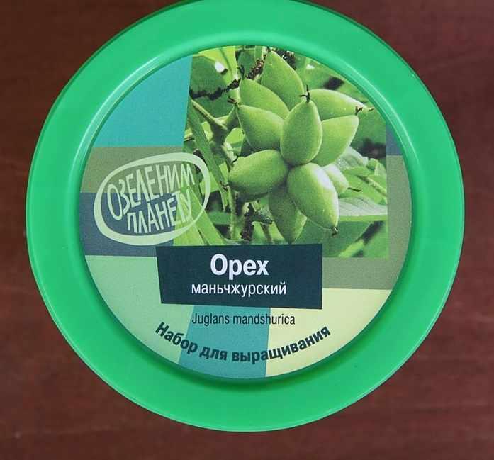 Растение BontiLand Для карьерного роста, газонная трава 414280
