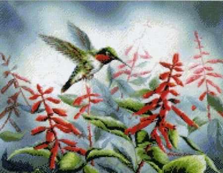 99947 колибри