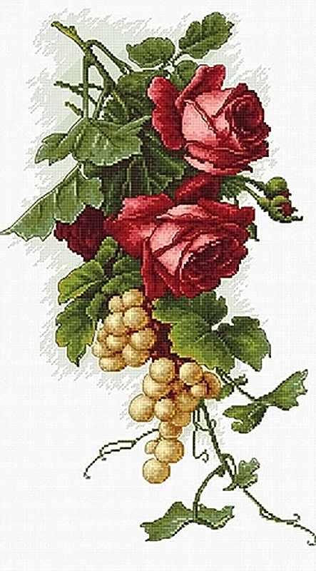 B2229 Красные розы с виноградом (Luca-S)