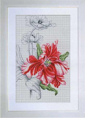 B2241 Красный тюльпан (Luca-S)