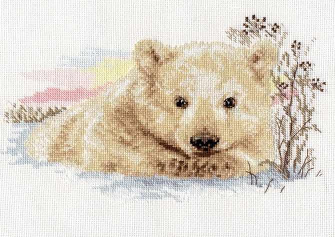 1-19 Северный медвежонок