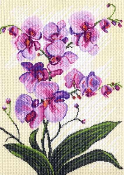 1317 Орхидеи, композиция (МП)