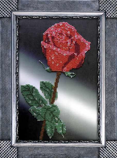 B-8 Роза