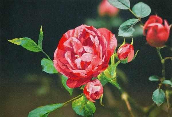 N0026 Розовые мечты