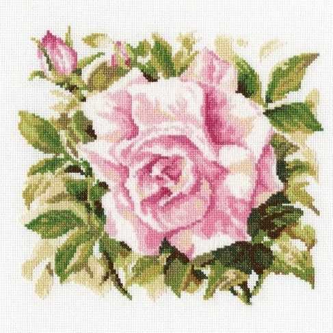 M372 Роза Грандифлора