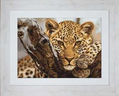 B525 Леопард