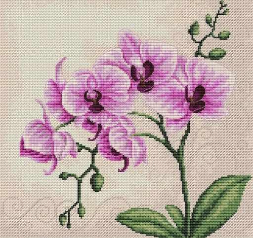 B2227 Орхидея